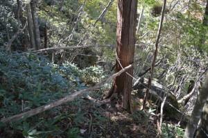 倒れた木が遊歩道に